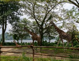 Singapurskie zoo