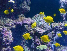 Singapur - Wyspa Sentosa - S.E.A Aquarium