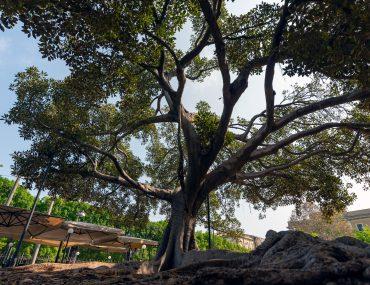 Syrakuzy - drzewo na placu zabaw
