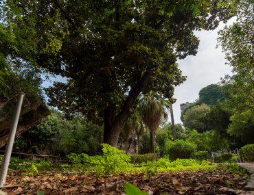 Syrakuzy - Park Archeologiczny w Neapolis