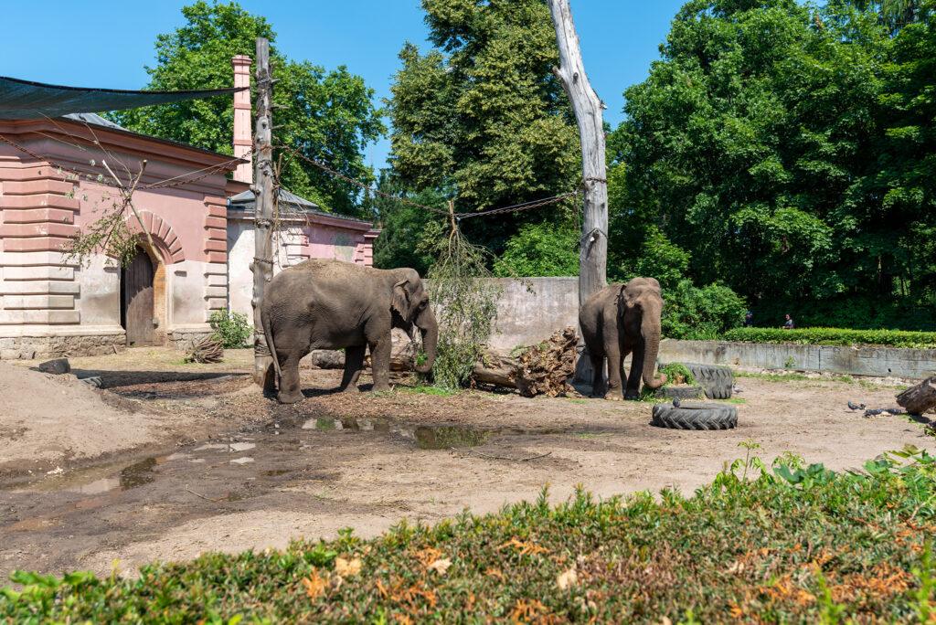 Wrocławskie zoo: słonie