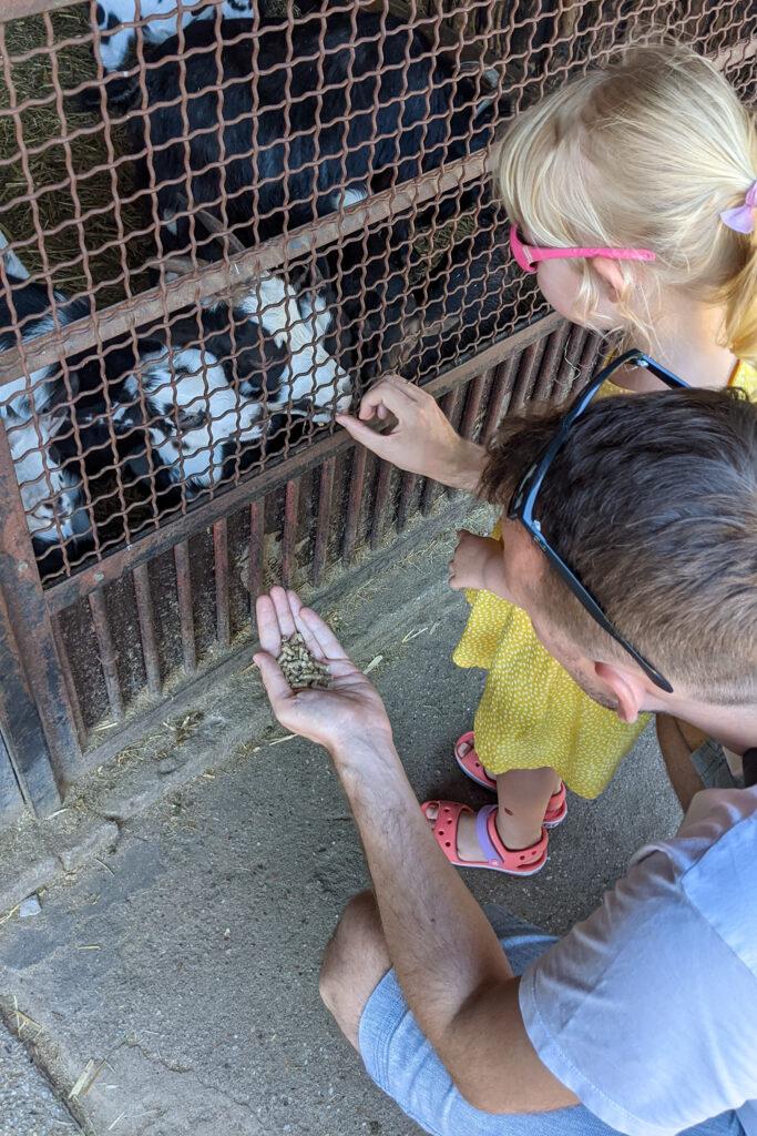 Wrocławskie zoo: karmimy kozy