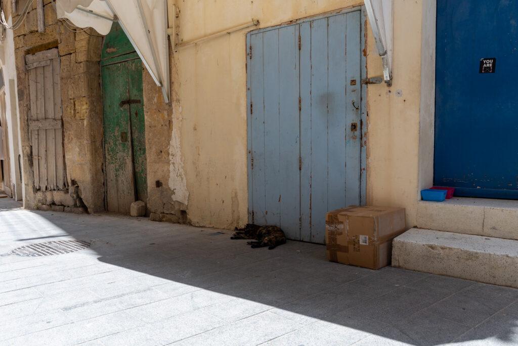 Rabat (Gozo) - jest tak gorąco, że nawet koty chowają się w cieniu